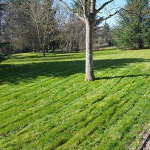 harmonivert paysagiste entretien pelouse saint gervais la foret vineuil